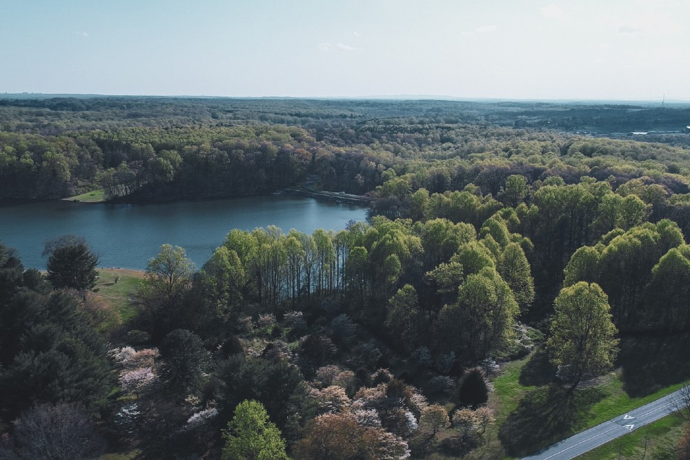 green trees and lake in germantown