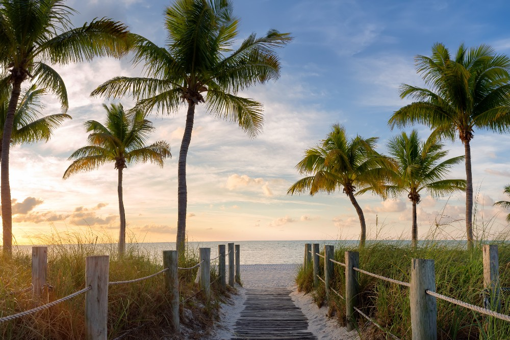 walkway to beach with palm trees at sunset